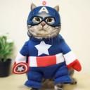 Déguisement chat Captain America