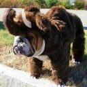 Déguisement chien mammouth