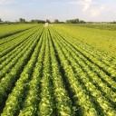 2-reduire-impact-ecologique-alimentation