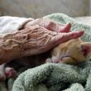 s'occuper d'un chat
