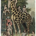 Girafe_Cartes-postales_InedEditions