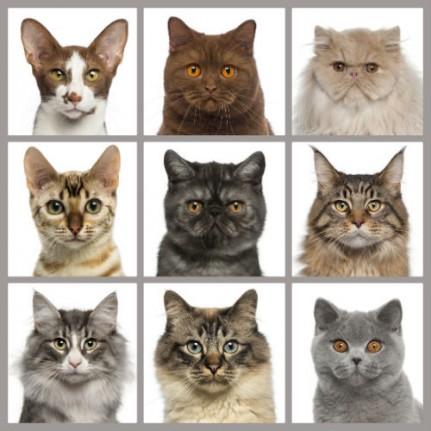 Fonds d'Écran: Sympathiques races de chats. Fonds, Photos