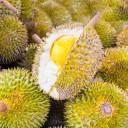 Durian - aliments potentiellement mortels