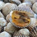 Tegillarca granosa - aliments potentiellement mortels