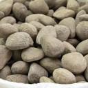 pangium edule - aliments potentiellement mortels