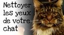 Comment-nettoyer-les-yeux-de-votre-chat.jpg