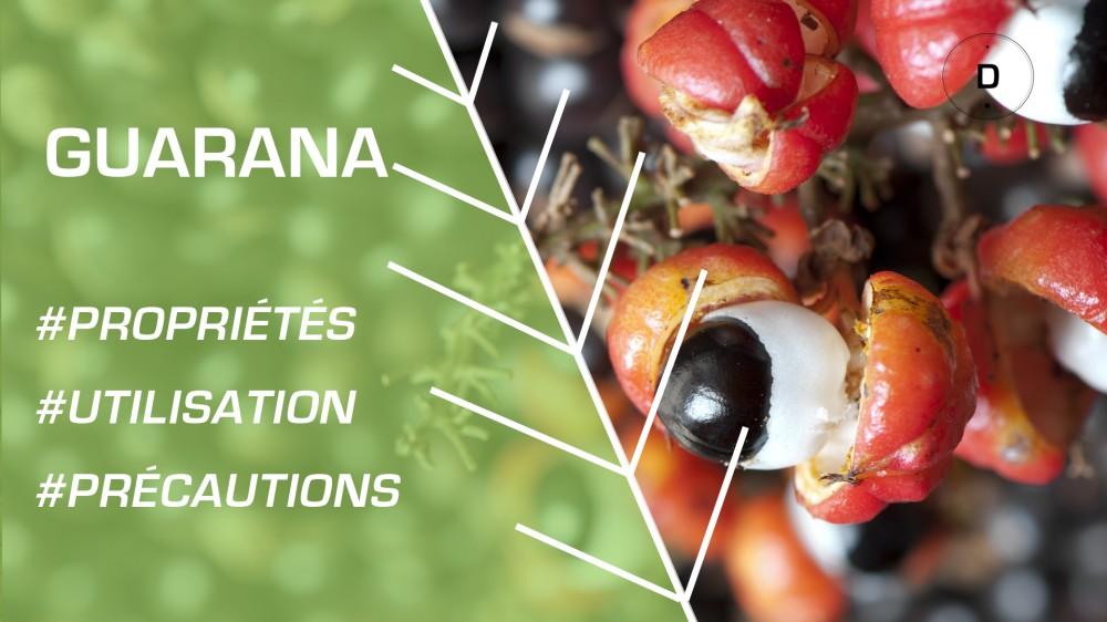 Le guarana pour un effet stimulant et nergisant nos - Moucheron plante remede naturel ...