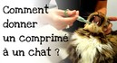 Comment-donner-un-comprime-a-son-chat.jpg