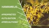 Phytothérapie - Comment utiliser l'hamamélis ?