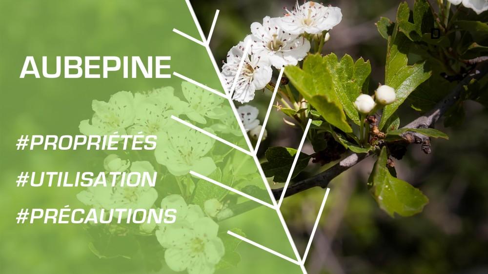 Aub pine bienfaits et recettes de rem des naturels en - Moucheron plante remede naturel ...