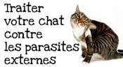 Comment-traiter-votre-chat-contre-les-puces-et-les-tiques.jpg