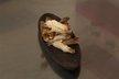 Croustillants de rhubarbe au gingembre