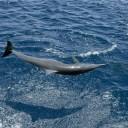 Un dauphin dans les airs